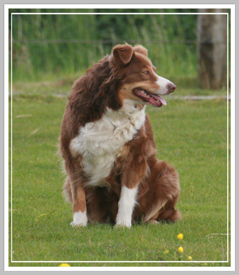Shepherd Dog Breeds Pictures Gallery Shepherd Dog Breeds Images | Dog ...