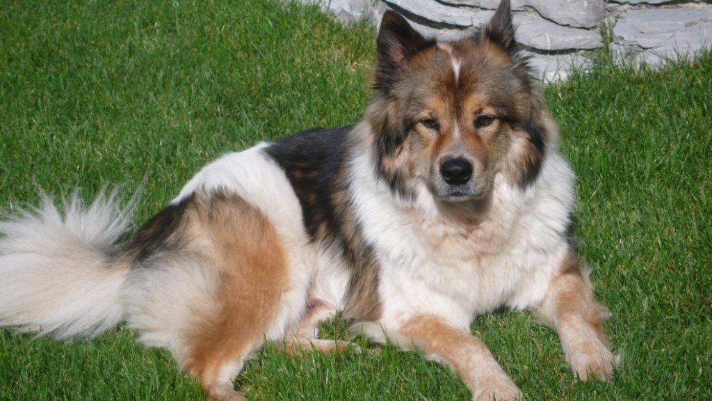 Liste Nicht Haarender Hunderassen Hundewissen Hundeseitede