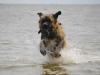 germanischer-baerenhund_1