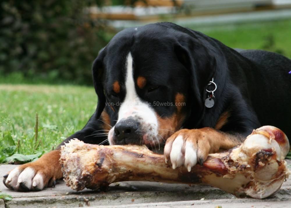 hunde til salg nordjylland