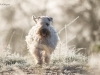 irish-soft-coated-wheaten-terrier-bilder2