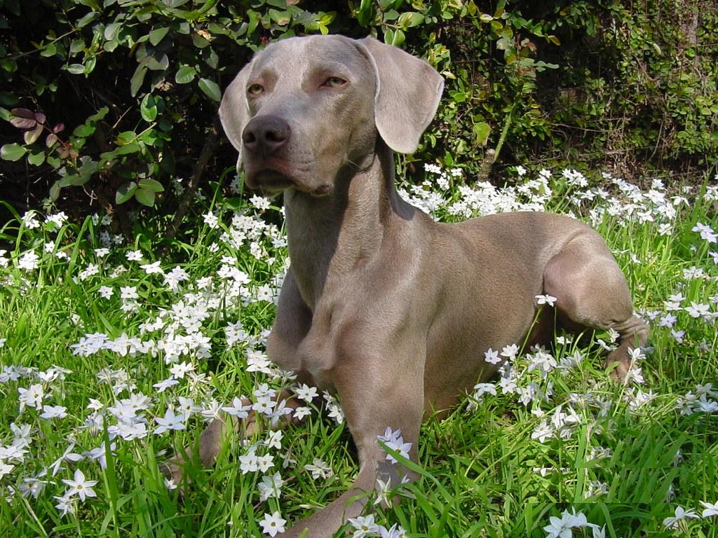 Hunde Related Keywords & Suggestions - Hunde Long Tail Keywords