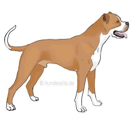 Banter Bulldogge - Banter Bulldog