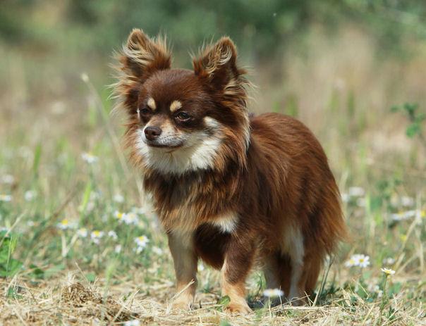 Dog Breeds C