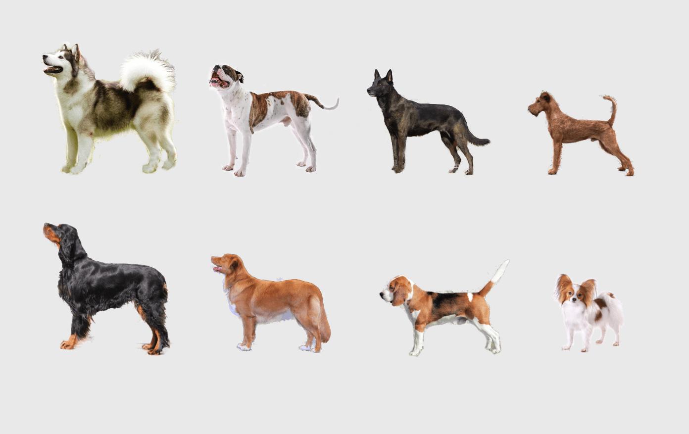 Hunderassen Mit Bild Rassehunde Ubersicht Hundeseite De