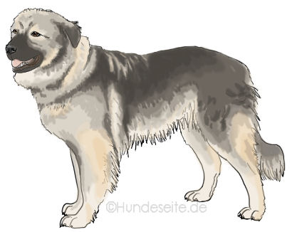 Kraski Ovcar - Karst Schaferhund Karstschäferhund