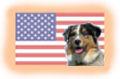 Amerikanische Hunderassen