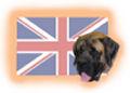 Englische Hunderassen