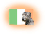Irische Hunderassen
