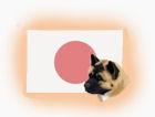 Japanische Hunderassen