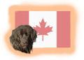 kanadische Hunderassen