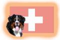 Schweizer Hunderassen