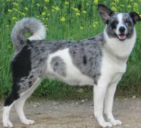 Hunde Mischlinge - Mischlingshunde - Hundeseite de