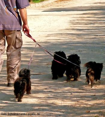 Hunde Knigge Regeln für Hundehalter