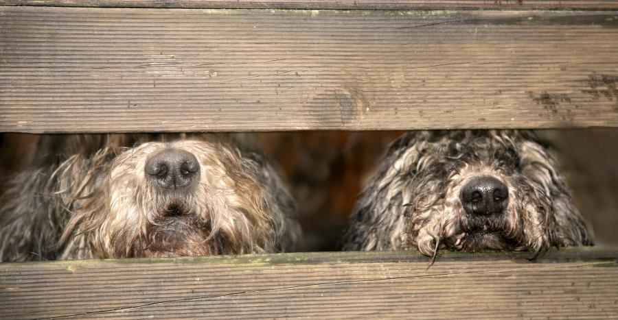 Neue Forschungsergebnisse Zum Hund Hunde Haltung Hundeseitede