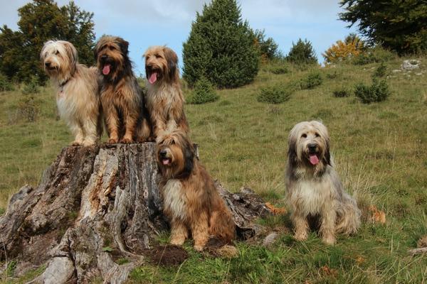 Wäller Hund Gruppe